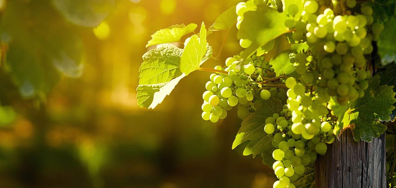 NH Wineries